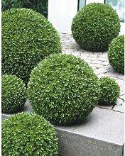 artplants - Hochwertige Deko Buchsbaumkugel, Ø 50