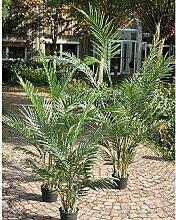 artplants - Künstliche Arecapalme im Zementtopf,