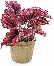 artplants - Künstliche Blattbegonie BENITA im Tontopf, 12 Blätter, rot, 22 cm - Kunstpflanze Königsbegonie / Deko Schiefblatt Pflanze