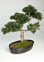 artplants - Künstlicher Bonsai Zeder in