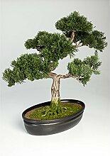 artplants Künstlicher Bonsai Zeder in Dekoschale,