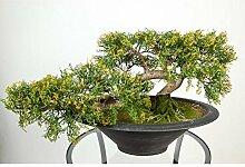 artplants Künstlicher Bonsai Zeder in Schale, 156