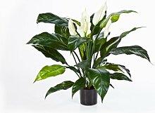 artplants Künstlicher Spathiphyllum Abby, weiß,