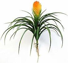 artplants - Kunst Vriesea Benicia, gelb-orange, 30