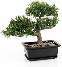 artplants Set 3 x Künstlicher Bonsai Zeder im