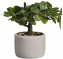 ASA Bonsai Ficus DEKO 24,5 x 17,5 x 24,5 cm