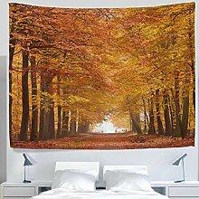 asddcdfdd Landschaft Natur Wald im Herbst Ahorn