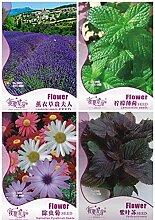 ASTONISH Erstaunen SEEDS: 1: Garten 4 Arten