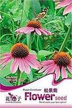 ASTONISH Erstaunen SEEDS: Eingemachte Blumensamen