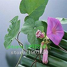 ASTONISH Erstaunen SEEDS: Eingemachtes Blumensamen
