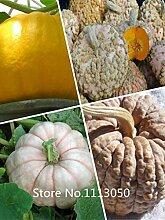 ASTONISH Erstaunen SEEDS: New Arrl! Gemüsesamen