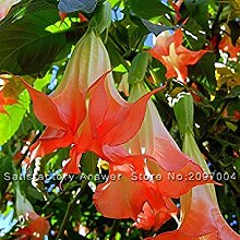 ASTONISH Erstaunen SEEDS: New Seeds 50 PC Rosa