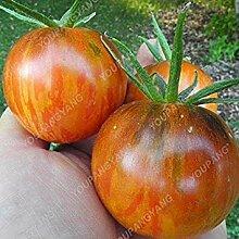 ASTONISH Erstauner SEEDS: Pflaume: 200 Samen
