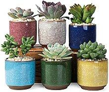 Atlnso 6cm Keramik Sukkulenten Töpfe Kaktus
