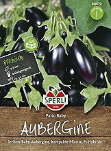 Aubergine, Patio Baby, Solanum melongena