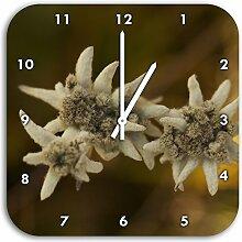 außergewöhnliche watteüberzogene Blüte,