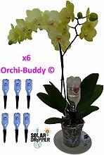 Automatische Bewässerung für Orchidee