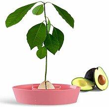 Avocado-Baum-Anzucht-Set, Avocado-Grube,