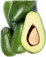 Avocado-Pflanze 'Ettinger' Persea