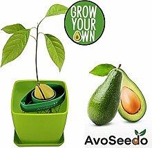 AvoSeedo das besondere Garten Geschenk - Pflanzen Sie Ihren eigenen Avocadobaum. Kleine Geschenke für Frauen und Männer Die neue klein Dekoration (Grün/Grün)