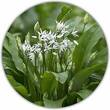 Bärlauch Saatgut - 30 Samen - Waldknoblauch -