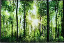 Bäume GLASBILD