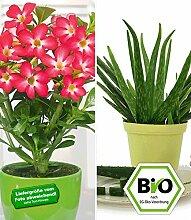 BALDUR-Garten Aloe vera & Wüstenrose rot, 2