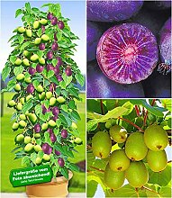 BALDUR-Garten Calathea Crocata,1 Pflanze