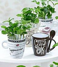 BALDUR-Garten Coffea Arabica mit Kaffeetasse,3 Sets