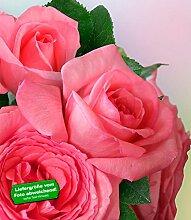BALDUR-Garten Delbard Edelrose Fragonard® 1