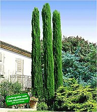 BALDUR Garten Echte Toskana