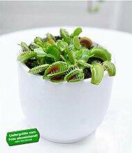 BALDUR-Garten Fleischfressende Pflanze