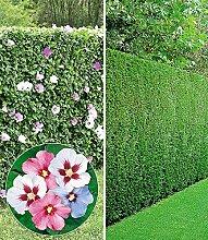 BALDUR-Garten Gemischte Hecken-Kollektion, 10