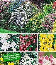 BALDUR-Garten Hecken-Kollektion,11 Pflanzen