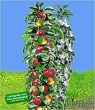 BALDUR-Garten Säulen-Apfel 'Red River®',