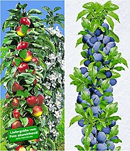 BALDUR-Garten Säulen-Obst-Kollektion Apfel &