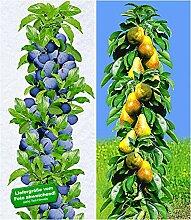 BALDUR-Garten Säulen-Obst-Kollektion Birnen &