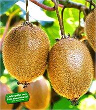 BALDUR-Garten Selbstfruchtende, großfruchtige