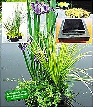 BALDUR-Garten Wasserpflanzen-Insel mit