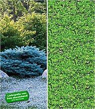 BALDUR-Garten Winterharte-Bodendecker-Kollektion,
