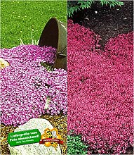 BALDUR-Garten Winterharte Bodendecker-Kollektion
