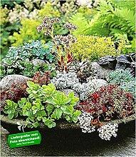 BALDUR-Garten Winterharte Sedum-Mischung