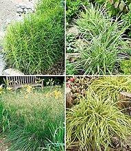 BALDUR-Garten Winterhartes Gräserbeet für