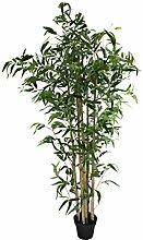 Bambus Baum mit schwarzem Topf XL - 185cm