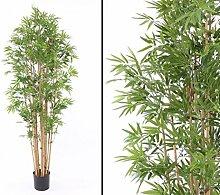 Bambus, mit ca. 3360 Blättern, Höhe 210cm -