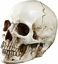 Baoblaze 1: 1 Menschliches Schädel Modell Figur