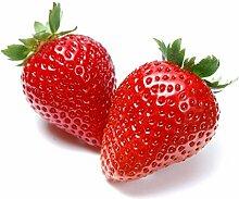 Barricade Küche Mülleimer reinigen 1L–verschiedene Düfte Strawberry