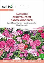 Bartnelke | Bio-Bartnelkensamen