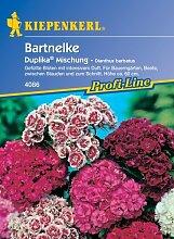 Bartnelke Duplika - Mix