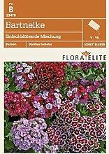 Bartnelke Einfachblühende Mischung von Flora Elite